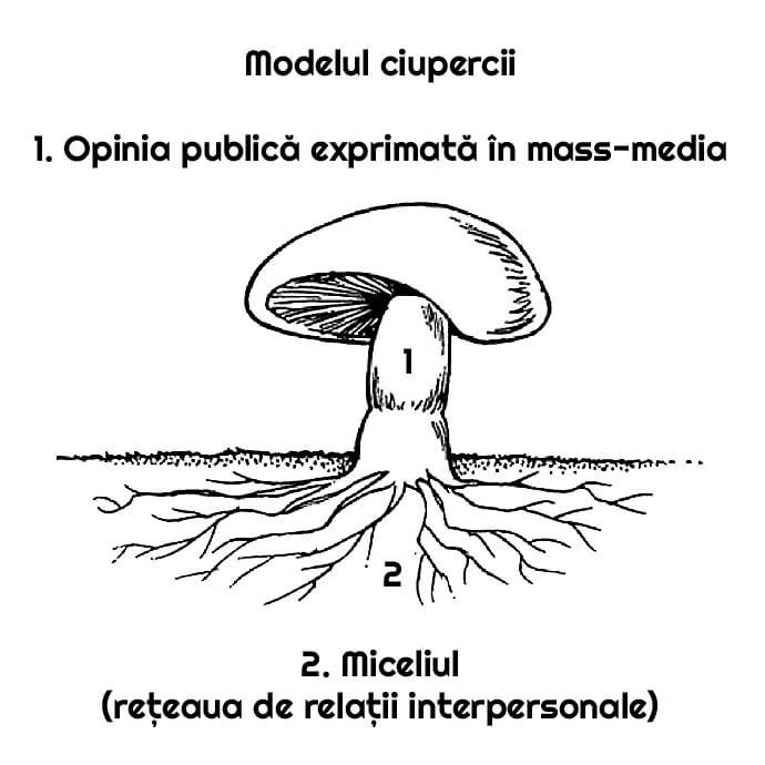 modelul ciupercii